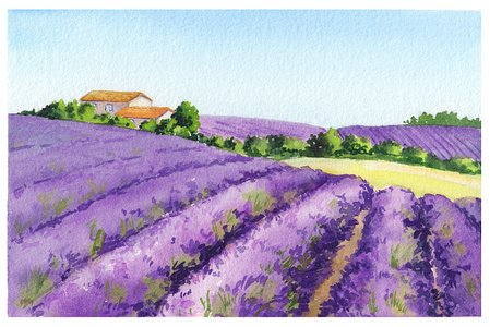 Lavender field clipart clip art free library Lavender Field With Rural House IN Provence, Watercolor premium ... clip art free library