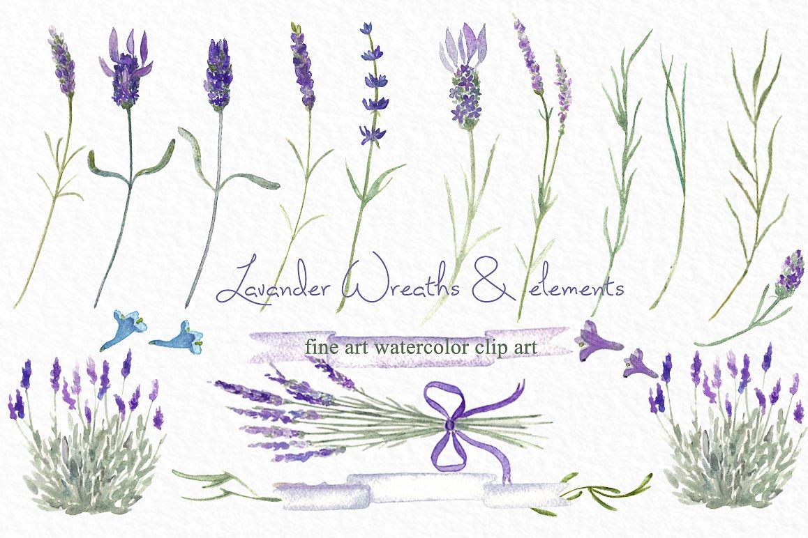 Lavender watercolor clipart