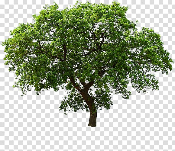 Layer transparent cliparts clip art royalty free library Tree , tree layer transparent background PNG clipart | HiClipart clip art royalty free library