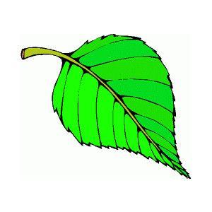 Leaf clipart color clip freeuse leaf clip art | All Types Of Leaf Clip Art Images | Preschool ... clip freeuse