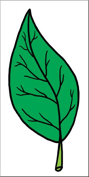 Leaf clipart color vector library Clip Art: Leaf Parts Color Unlabeled I abcteach.com | abcteach vector library