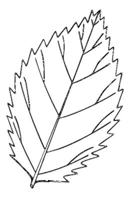 Leaf clipart color clip transparent download Download coloring of leaf clipart Autumn leaf color Coloring book clip transparent download