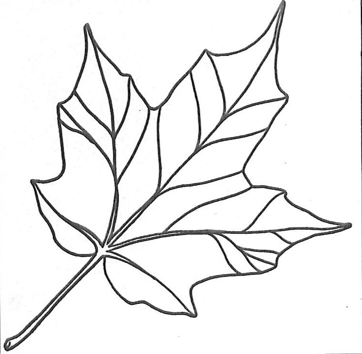 Leaf clipart outline different sizes jpg freeuse 1000+ images about Printables Leaves on Pinterest | Oak leaves ... jpg freeuse