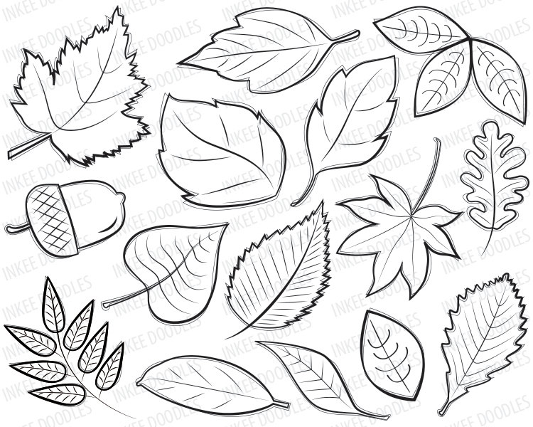 Leaf clipart outline different sizes banner library stock Autumn Leaves Digital Stamps Clipart black by InkeeDoodles | Hand ... banner library stock