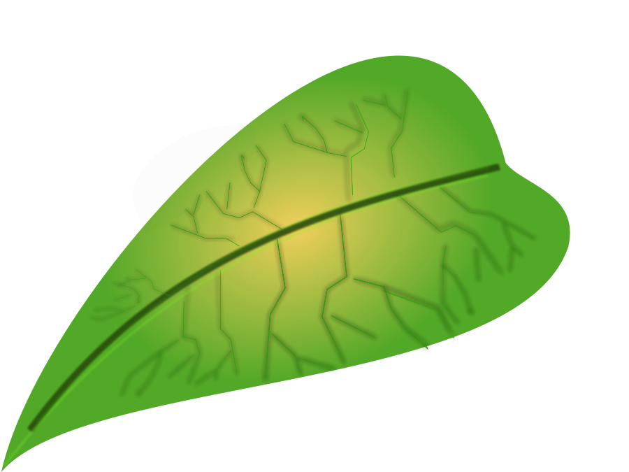 Leaf clipart outline different sizes image stock Picture Of Leaf | Free Download Clip Art | Free Clip Art | on ... image stock