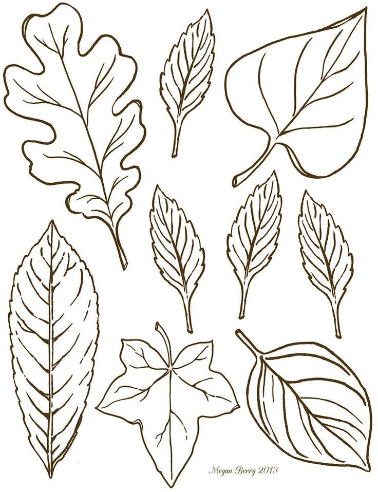 Leaf clipart outline differnt sizes jpg library stock 1000+ images about Printables Leaves on Pinterest   Oak leaves ... jpg library stock