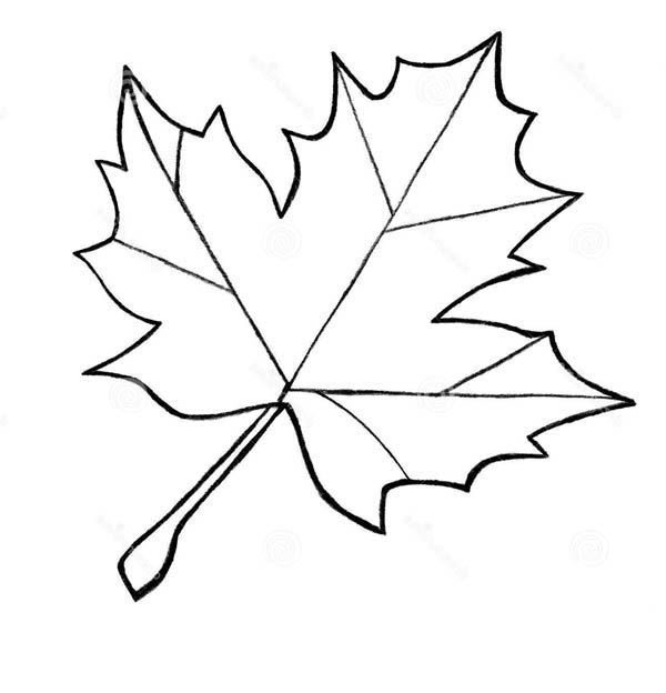 Leaf clipart outline differnt sizes clip art freeuse download 17 Best ideas about Maple Leaf Images on Pinterest   Canadian ... clip art freeuse download