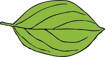 Leaf cliparts royalty free download Leaves leaf clipart clipart cliparts for you 2 - Clipartix royalty free download