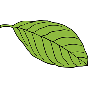 Leaf cliparts download oval leaf clipart, cliparts of oval leaf free download (wmf, eps ... download