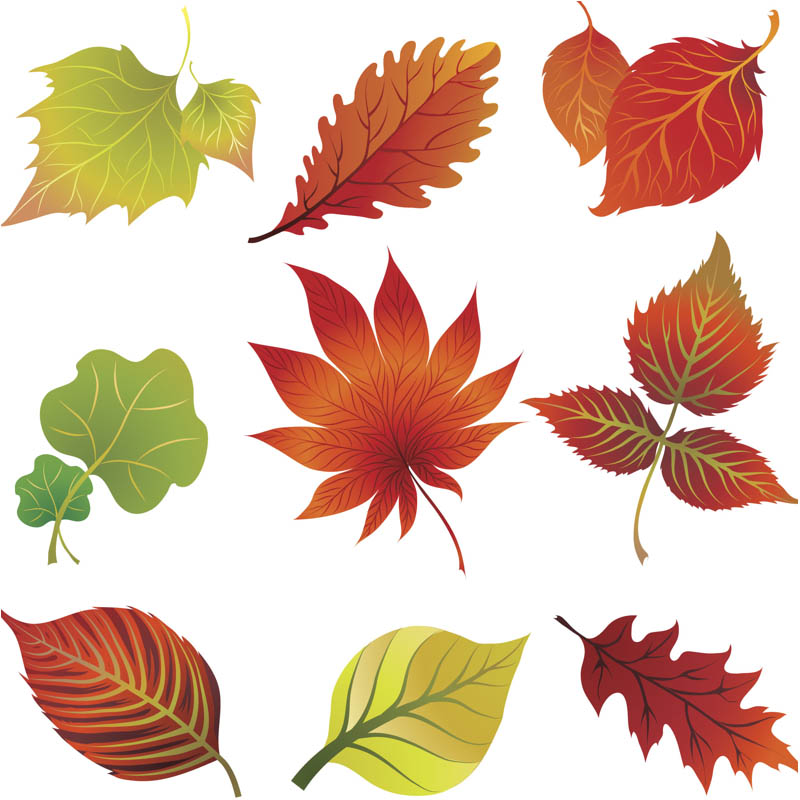 Leaf graphics clipart black and white library Autumn leaves graphics clipart clipart kid 3 - Cliparting.com black and white library