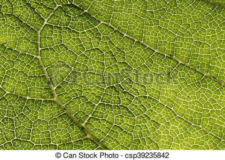 Leaf texture clipart vector transparent library Green leaf texture, Abstract nature close up vector transparent library