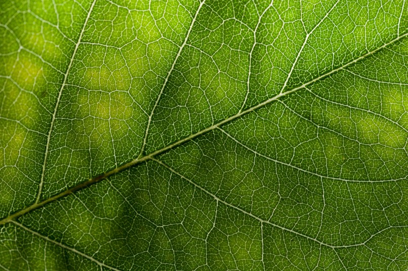 Leaf texture clipart picture royalty free library leaf textures | Jidileaf.co picture royalty free library