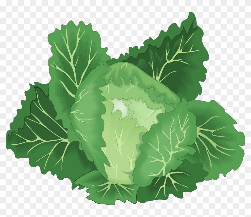 Leafy green clipart image freeuse stock Lettuce Clipart Leafy Vegetable - Green Vegetable Clipart Png ... image freeuse stock