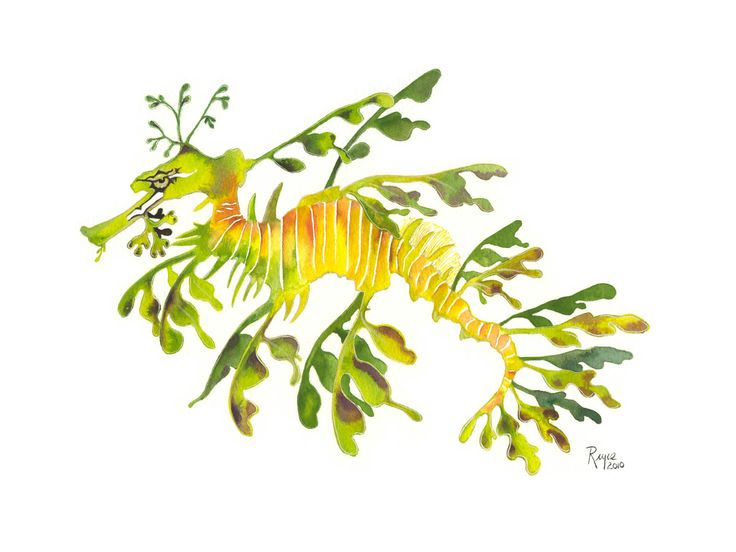 Leafy seadragon clipart png freeuse library Clip Art Of Leafy Sea Dragon U16763696 - S #51892 - Clipartimage.com png freeuse library