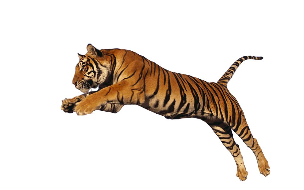 Leaping tiger clipart picture transparent download Transparent Clipart Image Jumping Tiger PNG - Free Transparent PNG ... picture transparent download