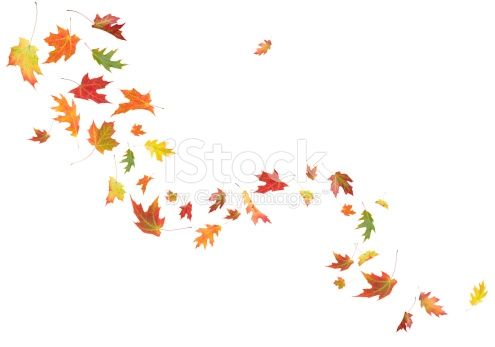 Leaves blowing in the wind clipart graphic royalty free Real maple and oak leaves blowing in the wind. | Hood and Hair ... graphic royalty free
