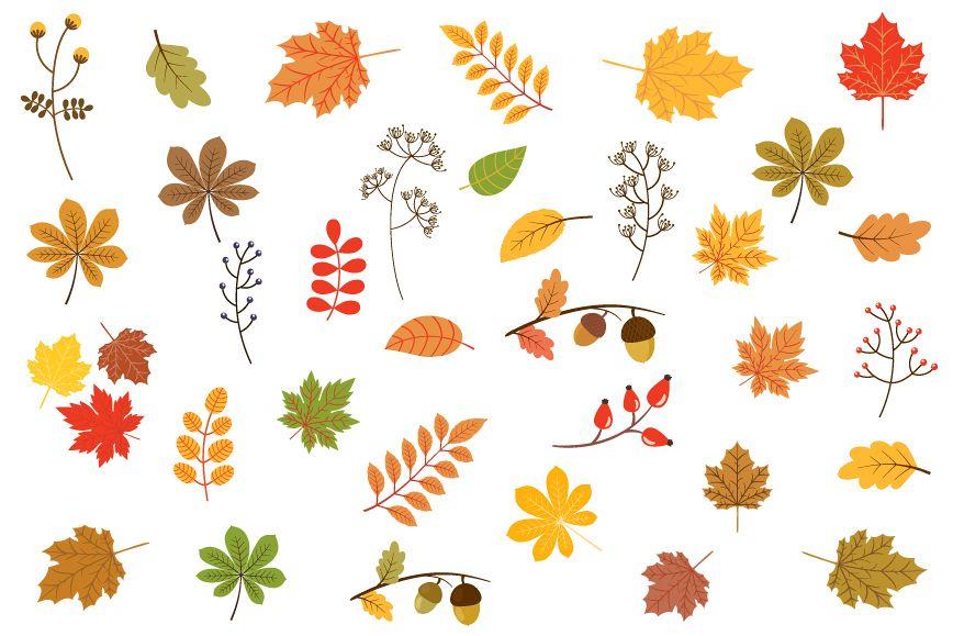 Leeyes clipart svg Autumn leaves clipart, Fall foliage clip art set svg