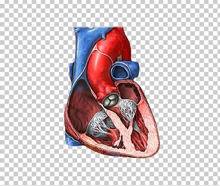Left ventricle clipart clip transparent stock Mitral Valve Tricuspid Valve Heart Valve Mitral Insufficiency PNG ... clip transparent stock