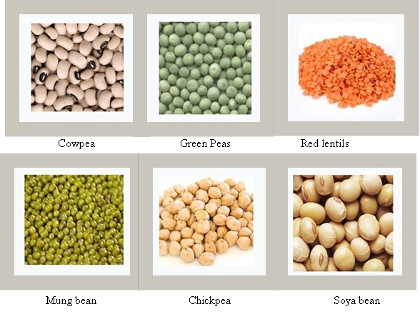 Legume examples png freeuse download Difference Between Cereals and Pulses png freeuse download