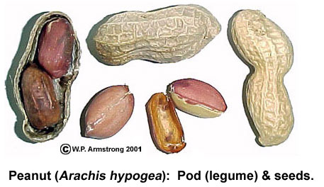 Legume examples clip art black and white library Fruit Terminology (Part 1) clip art black and white library