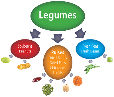 Legume examples graphic freeuse What is a Pulse? graphic freeuse