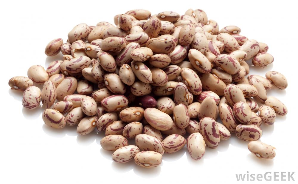 Legume examples clip library download What are Legumes? (with pictures) clip library download