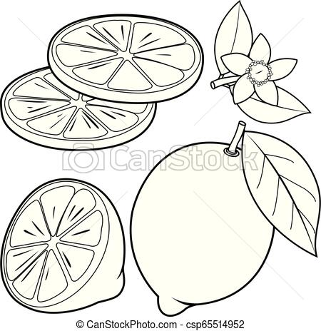 Lemon with leaf clipart black and white royalty free Whole and half sliced lemon fruit, lemon flowers and leaves. Vector black  and white coloring book page royalty free