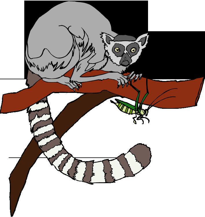 Lemur clipart vector free stock Free Lemur Clipart vector free stock