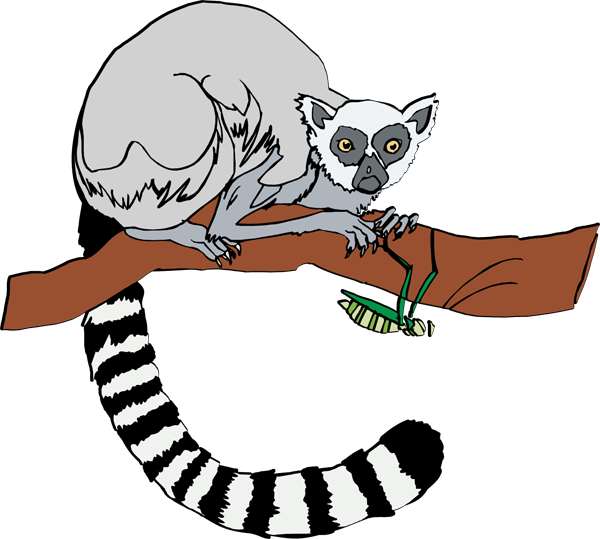 Lemur clipart vector freeuse download Ring-tailed Lemur   Clipart Panda - Free Clipart Images vector freeuse download