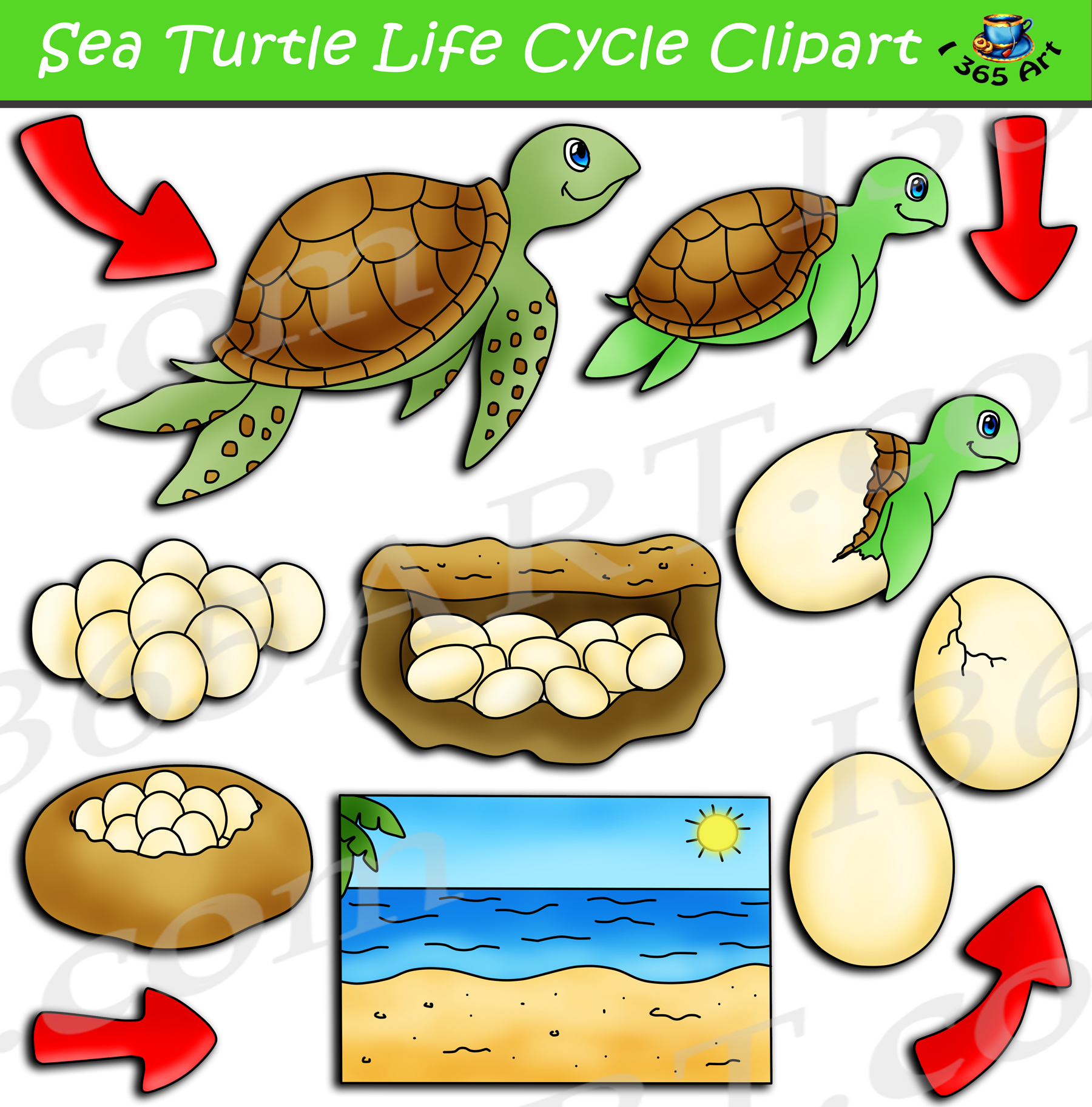 Life cycle of a ocean animals clipart clip art freeuse library Sea Turtle Life Cycle Clipart Pack clip art freeuse library