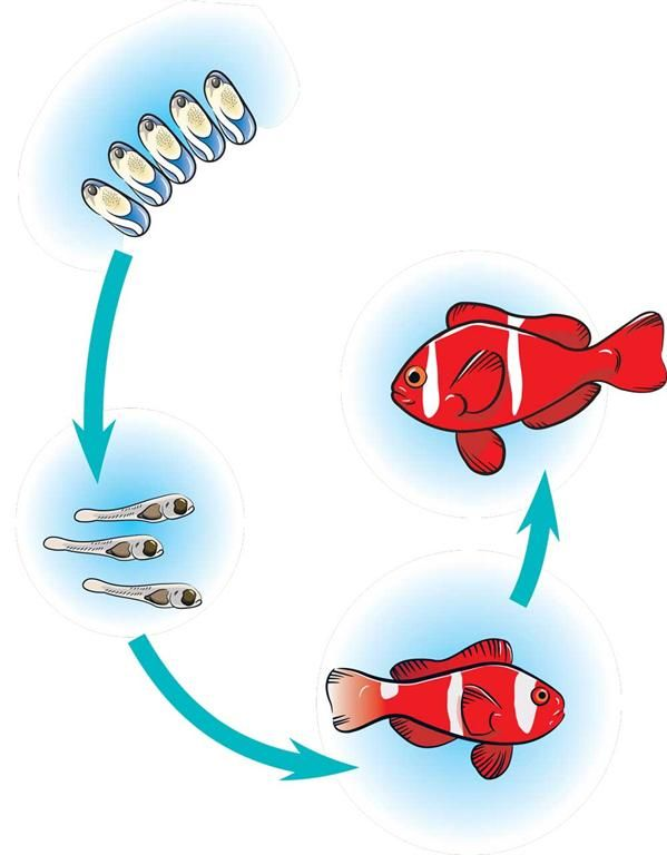 Life cycle of a ocean animals clipart jpg transparent fish life cycle | Life Cycles | Fish life cycle, Life cycles, Fish ... jpg transparent