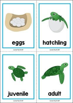 Life cycle of a ocean animals clipart png transparent stock Ocean Preschool Centers | Kids, Teaching Life Cycle Turtle ... png transparent stock