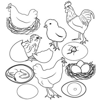 Life is better with chickens around clipart black and white picture transparent Chicken Life Cycle Clip Art picture transparent