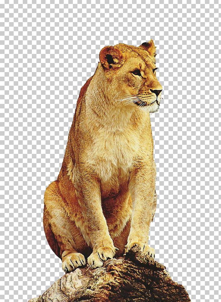 Liger clipart clip download East African Lion Leopard Tiger Liger Giraffe PNG, Clipart, Animal ... clip download