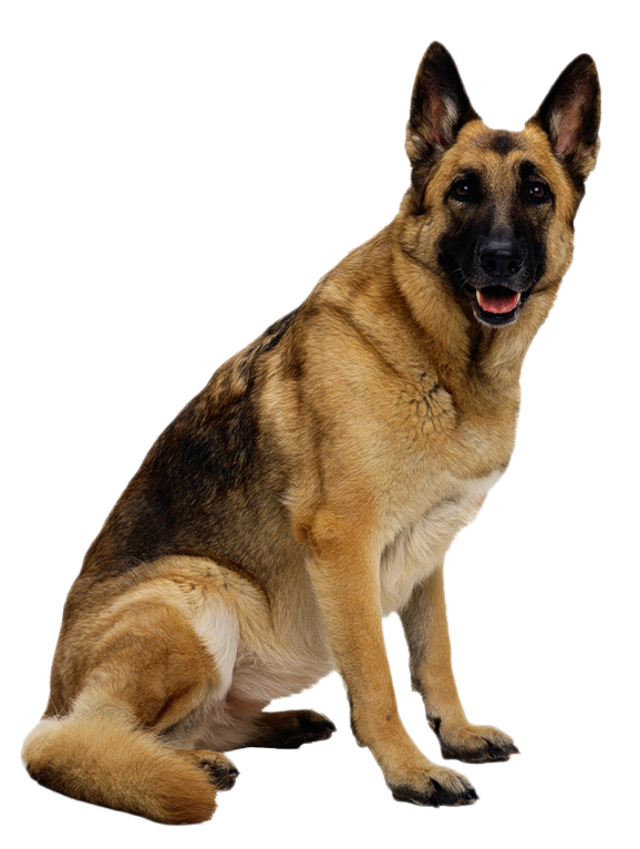 Light brown dog clipart png library library BJM's Cemetery Discoveries: Tombstone Tuesday: Cadaver Dogs for ... png library library