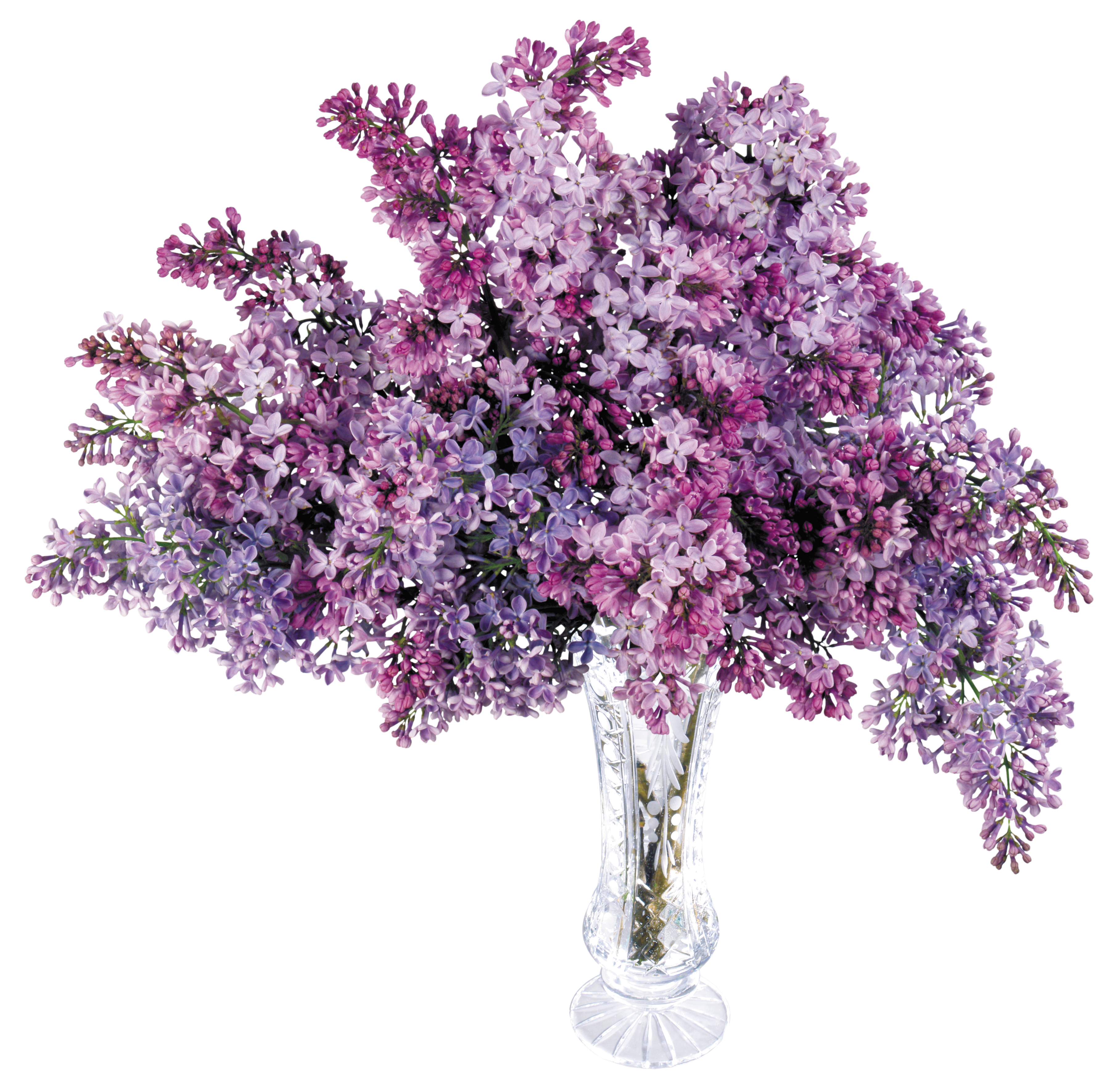 Lilac tree clipart svg black and white Lilac Tree Clipart svg black and white