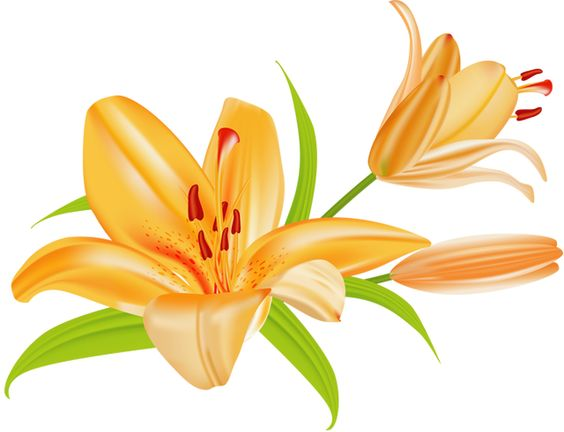 Lilies clipart clip freeuse stock Free Lily Cliparts, Download Free Clip Art, Free Clip Art on ... clip freeuse stock
