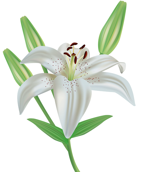 Lilies flowers clipart black and white Pin by Jeny Chique on Flores Imagenes | Flower clipart png ... black and white