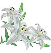 Lilies clipart vector freeuse stock Free Lily Cliparts, Download Free Clip Art, Free Clip Art on ... vector freeuse stock