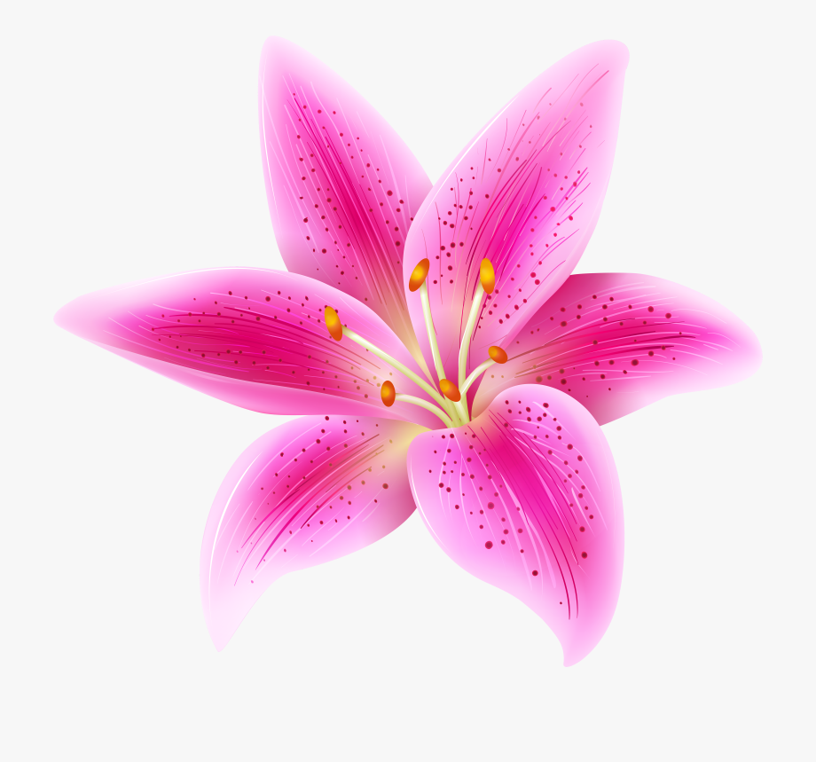 Lilies clipart jpg royalty free Lily Flower Clipart, Cliparts & Cartoons - Jing.fm jpg royalty free