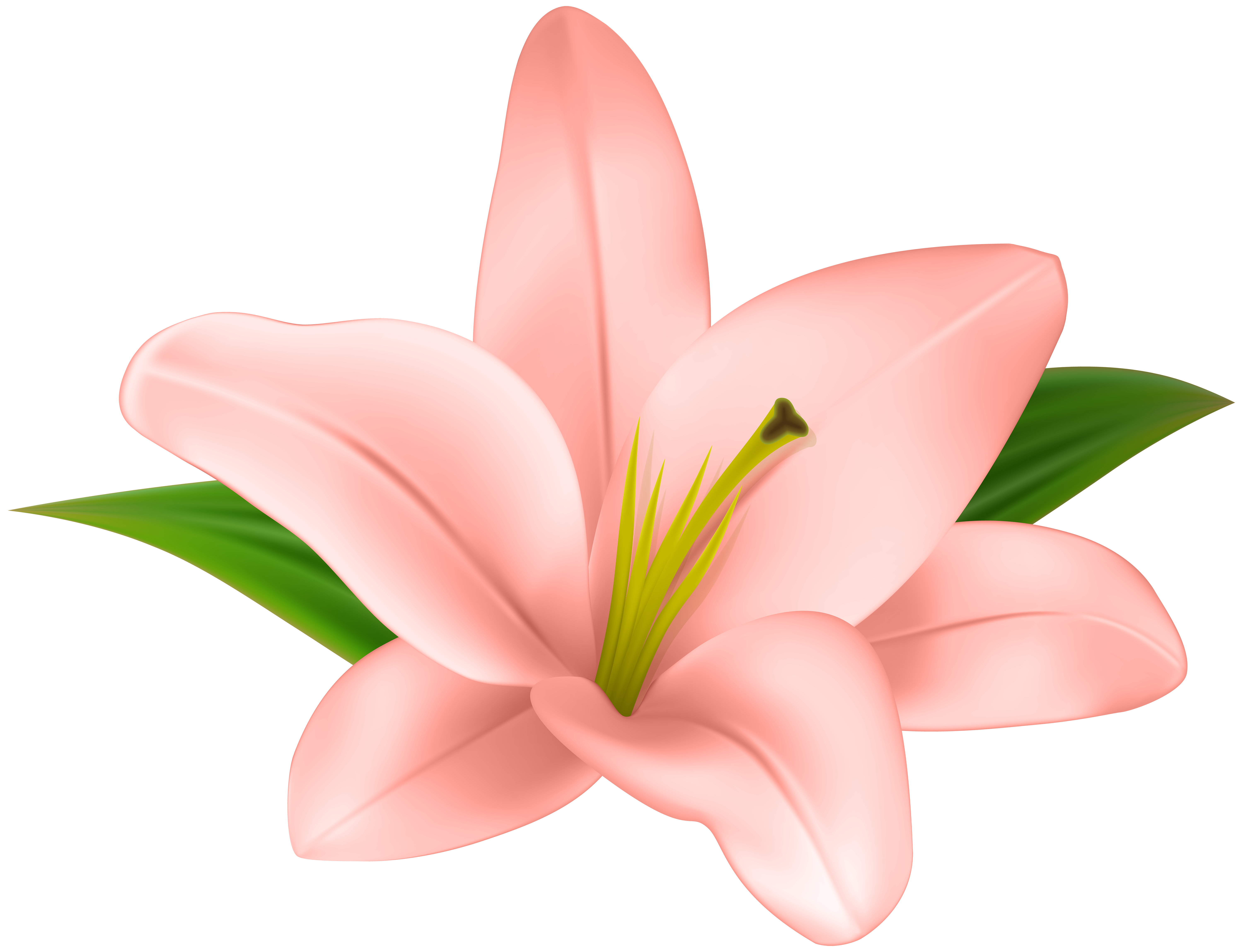Lilies flowers clipart vector Lily flower art clipart images gallery for free download ... vector