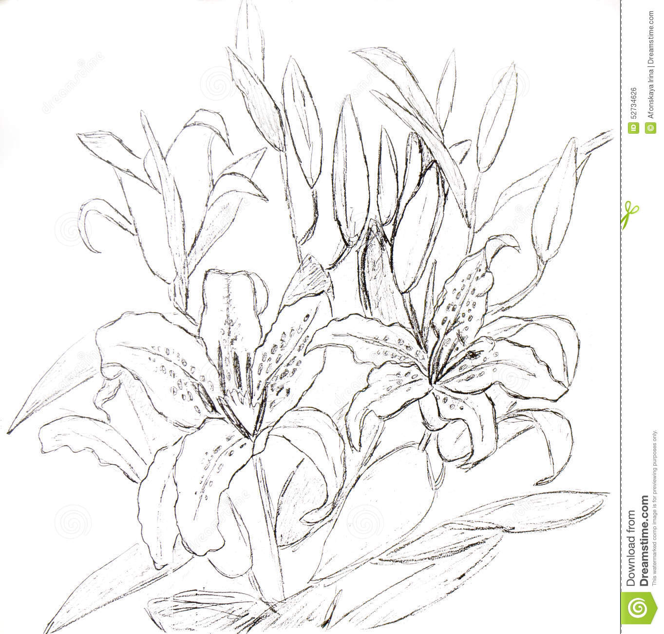 Lilies graphics svg library library Lilies, Graphics Stock Illustration - Image: 52734626 svg library library
