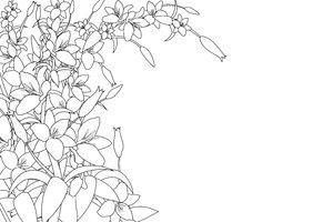 Lilies graphics clip art freeuse Free stock photos - Rgbstock -Free stock images   White Lilies 2 ... clip art freeuse