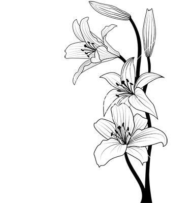 Lilies graphics image transparent stock Lily Graphic - ClipArt Best image transparent stock