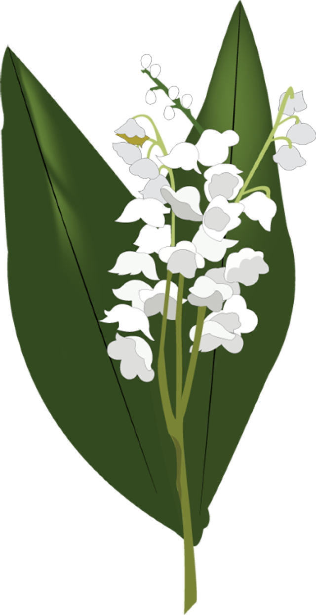 Lilies of the valley clipart clipart freeuse 67+ Lily Of The Valley Clipart | ClipartLook clipart freeuse