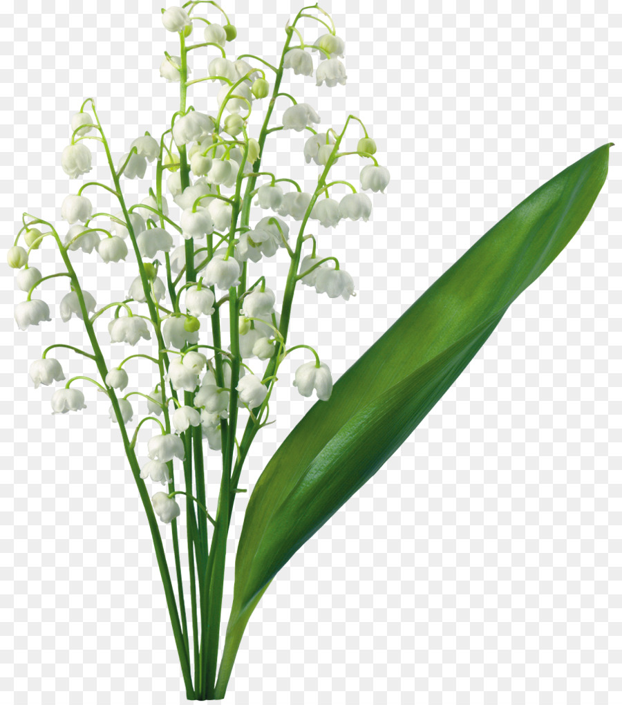 Lilies of the valley clipart graphic free download Flowers Clipart Background png download - 880*1015 - Free ... graphic free download