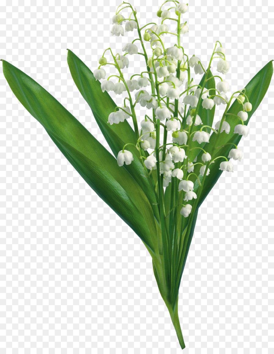 Lilly of the valley clipart picture black and white download Flowers Clipart Background png download - 1100*1401 - Free ... picture black and white download