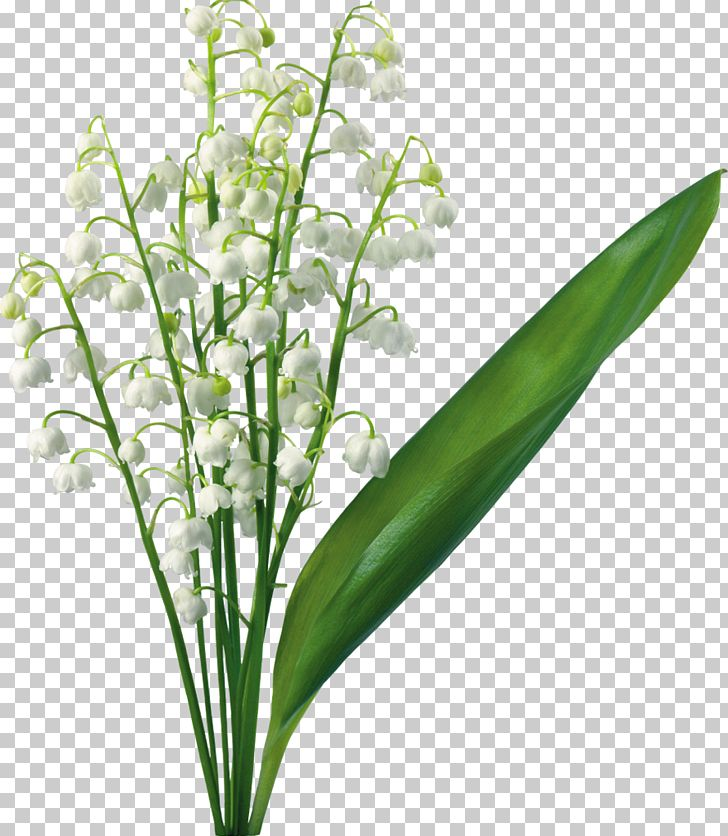 Lilly of the valley clipart banner black and white download Lily Of The Valley Flower Lilium PNG, Clipart, Arumlily ... banner black and white download