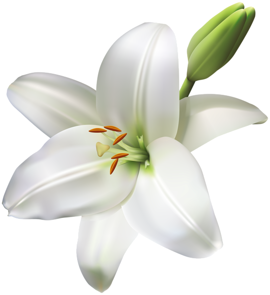 Lily flower border clipart clipart library download Gallery - Flowers PNG clipart library download