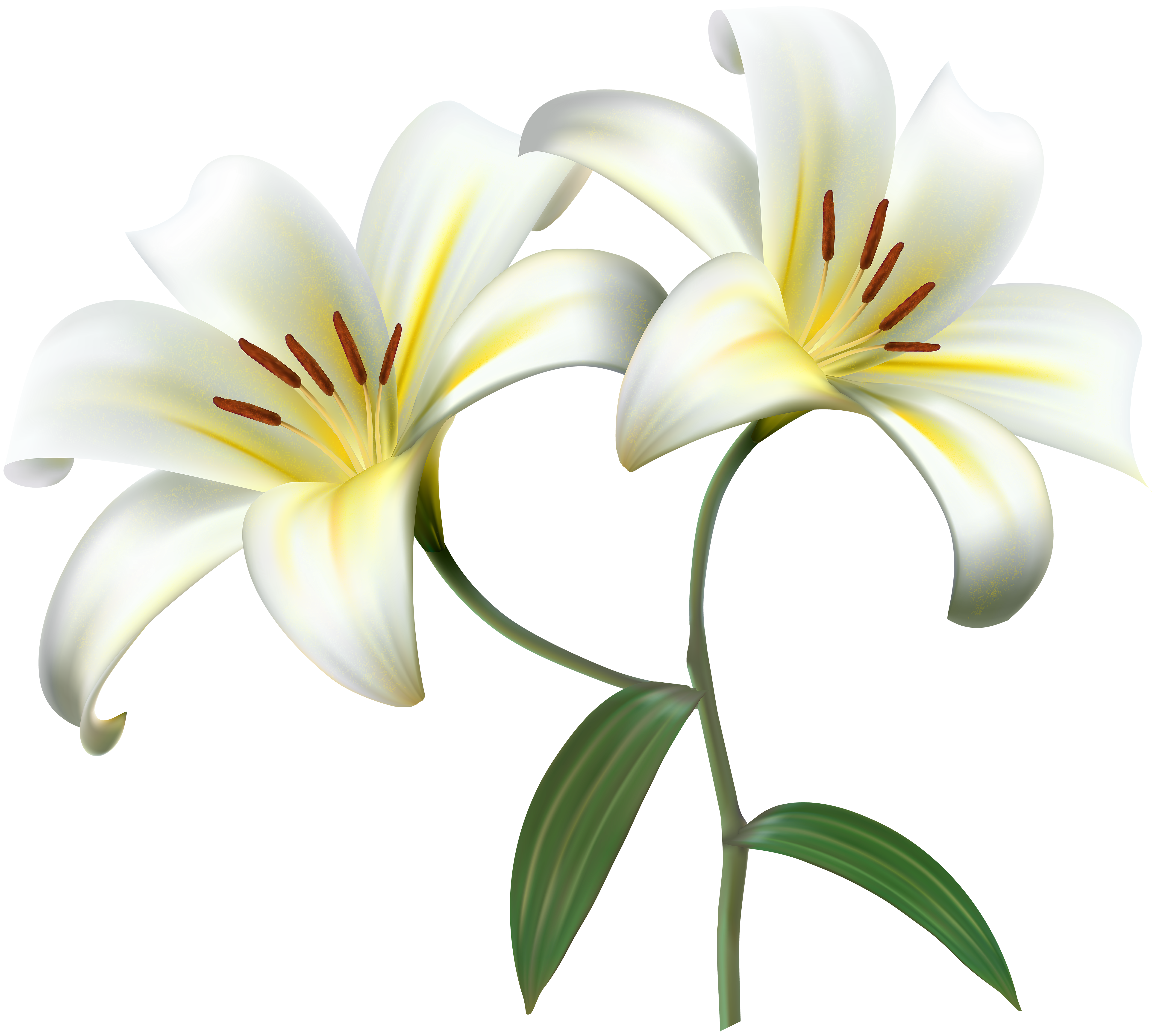 Lily flower border clipart graphic black and white download White Lilium Flower Decorative Transparent Image | Gallery ... graphic black and white download